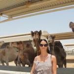 Auf der Kamelfarm