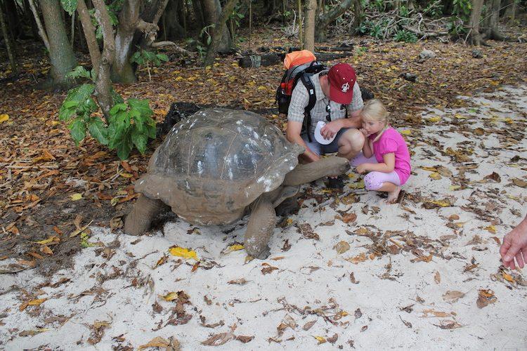 Georg, die Riesenschildkröte