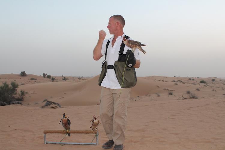 Falkenshow in der Wüste