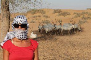 Al Maha Wüstenresort – Eine besondere Reiseidee