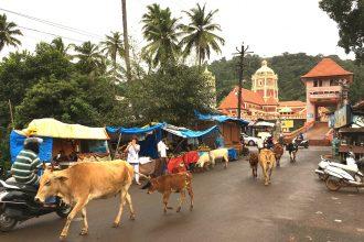 titelbild_goa_holy_cows