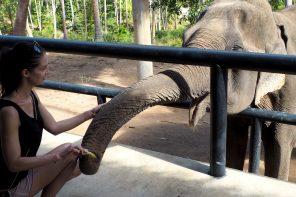 Koh Samui: 3 Must-Do's auf der thailändischen Badeinsel